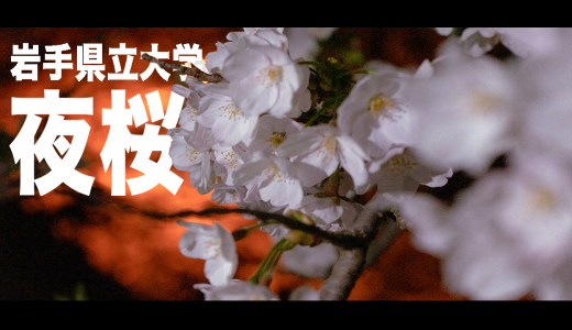 岩手県立大学 滝沢キャンパス 夜桜 Cinematic Movie制作